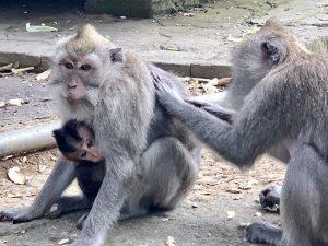 Monkey Forest Baby Monkey